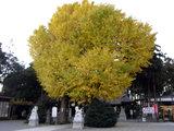 亀ヶ池八幡宮