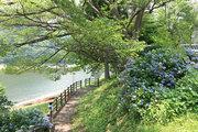 奥多摩湖 留浦浮橋